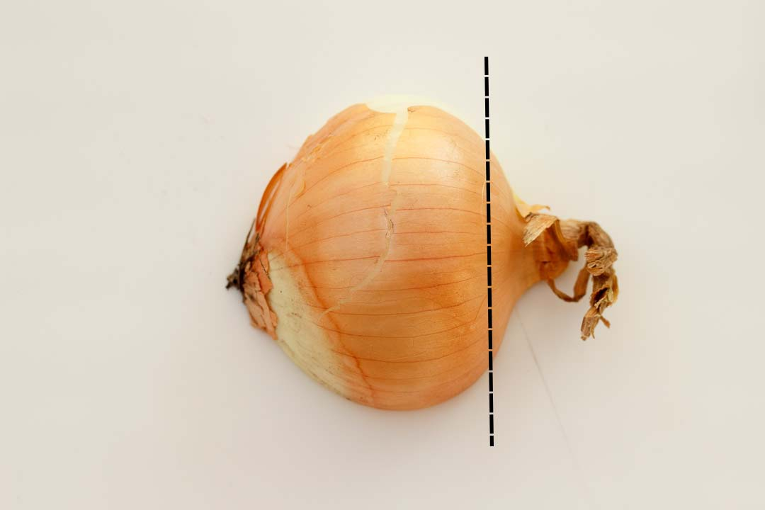Half an onion with a cut line on it