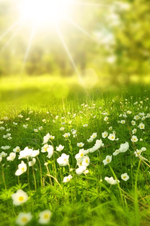 A sunny field