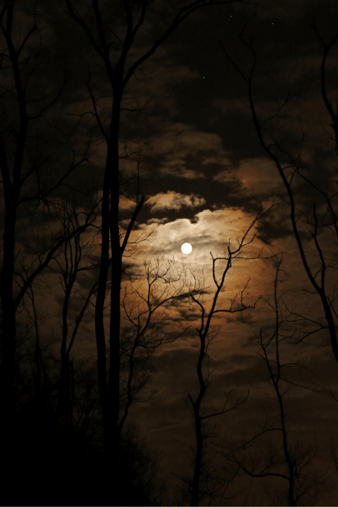 the moon and trees on a dark and cloudy night