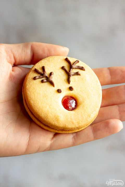 Someone holding a reindeer cookie up against a grey/off white backdrop